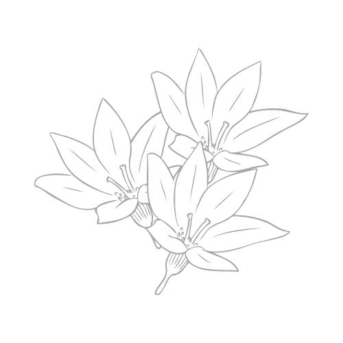 lucim - puissants extraits botaniques
