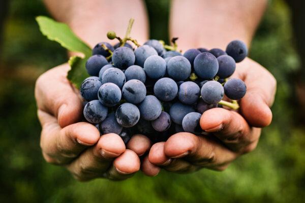 photo de deux mains tenant du raisins